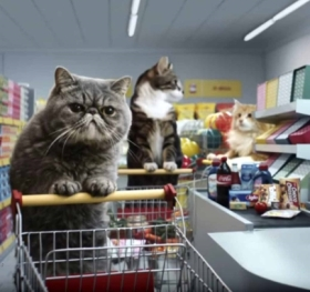 grocery-shopping-cats-image10