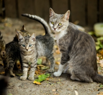 selective-focus-photo-of-silver-tabby-cat-and-kittens-1416792