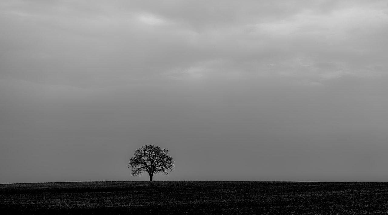 Grey Matter: Autumn and Winter